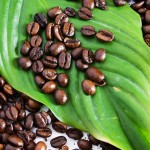 The Right Information About Gourmet Coffee